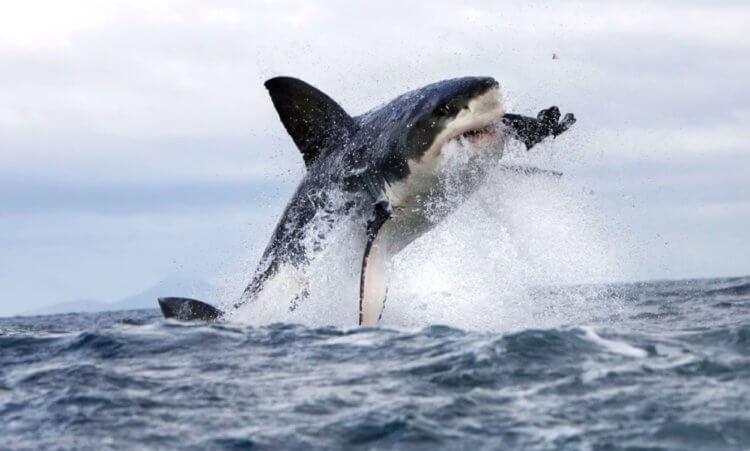 Самый простой способ выжить после нападения акулы