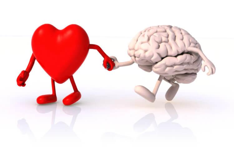 Как сердце заставляет мозг отключаться и делает нас глупее
