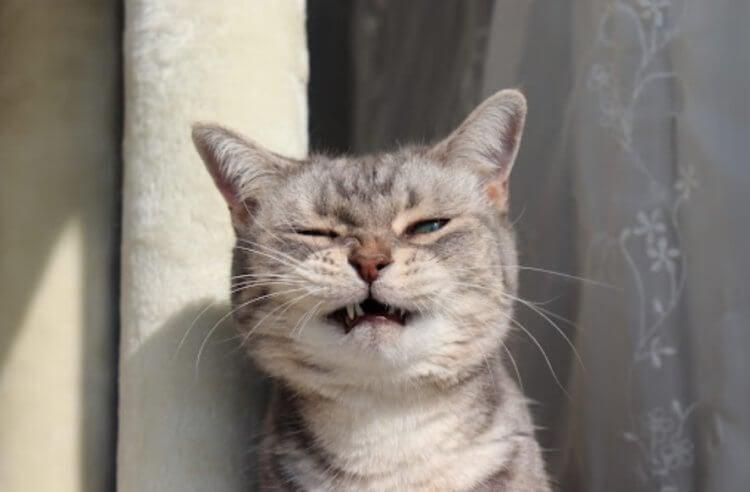 7 типов личности кошек: какой характер у вашего животного?