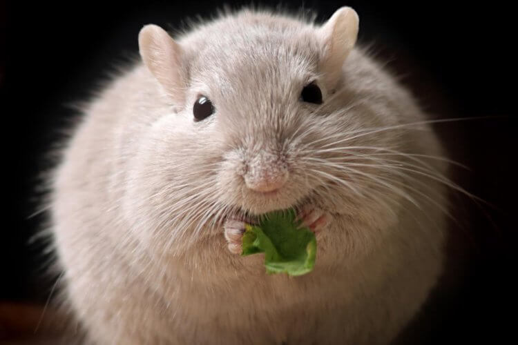 Ученые нашли гены, которые вызывают ожирение