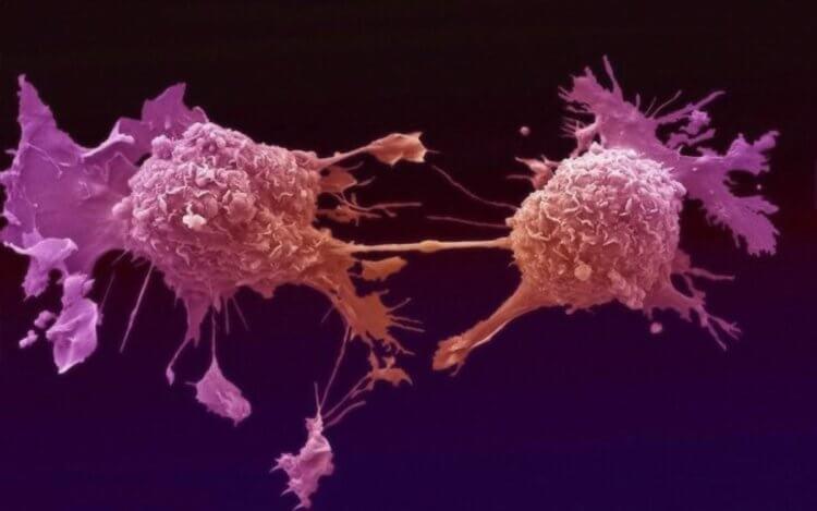 По мнению ученых, защиту организма от рака могут обеспечивать прыгающие гены