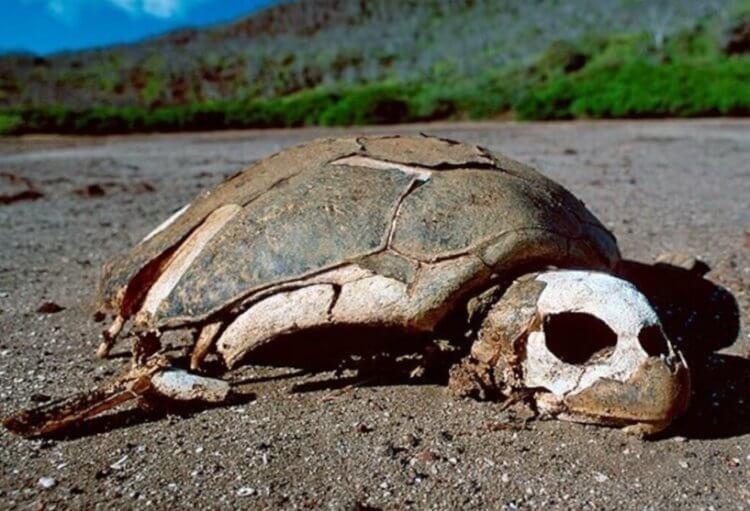 В США полностью вымерло 22 вида животных, но их можно было спасти