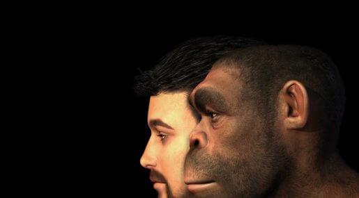 Почему головной мозг современных людей меньше, чем у далеких предков?