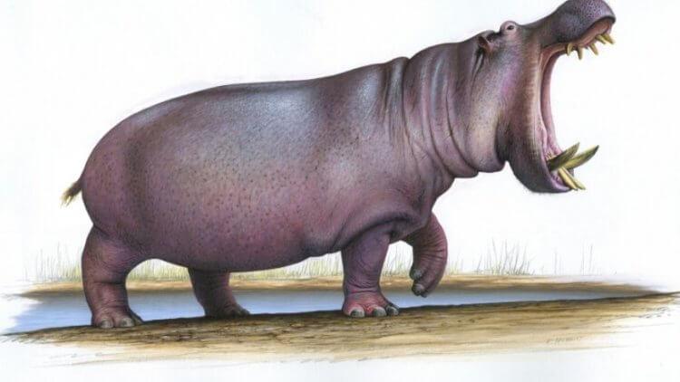 В Великобритании найдены останки гигантского бегемота весом более 3 тонн