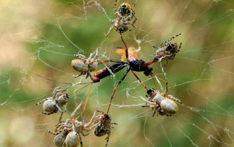 Полезные свойства паутины оказались мифом