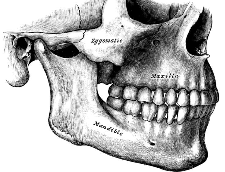 Почему зубы мудрости растут только у взрослых?